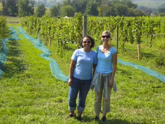 grapeharvesting_001