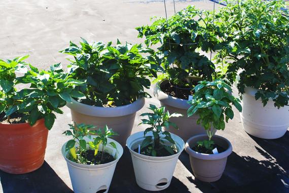 gardening2010_001