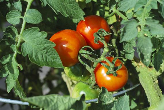 gardening2010_002